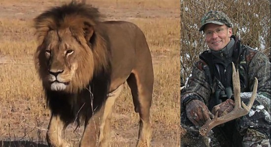 Cecil  Lion Hunter